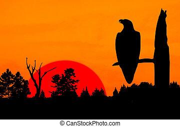 silhouette, von, friedlich, adler, an, sonnenuntergang