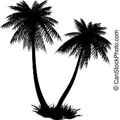 silhouette, von, palms.