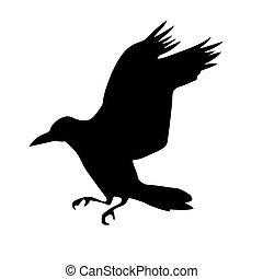 silhouette, vrijstaand, vector, achtergrond, witte , raaf