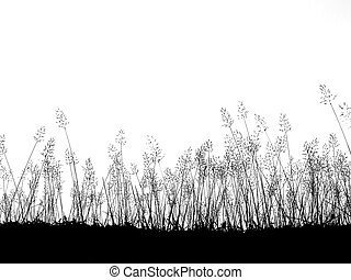 Silhouette wild grass flowers meadow isolated over white background
