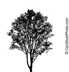 silhouette, witte , boompje, black