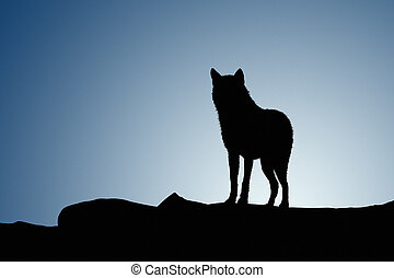 Wolf on a moonset - Silhouette Wolf on a moonset and on ...