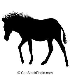 silhouette, zebra