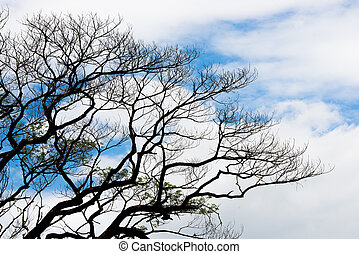 Silhouetted branch of tree against blue sky