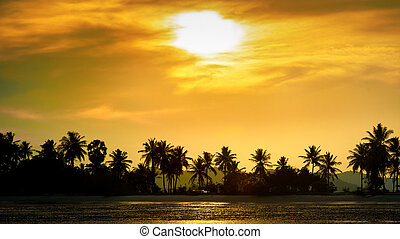 Silhouetted coconut palm trees on the beach at sunset time