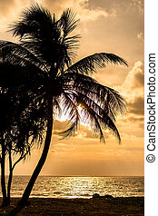 Silhouetted coconut tree on beach at sunset.