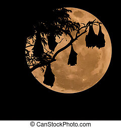 silhouetted fruit bat on tree with the moon...