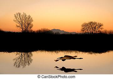 silhouetted, reflexiones, árbol