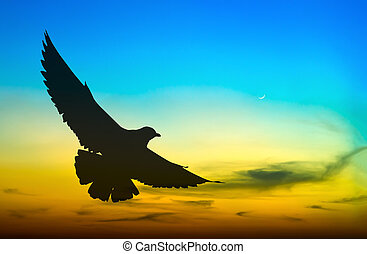 Silhouetted seagull flying at colorful sunset