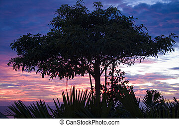 Silhouetted tree against a sunset