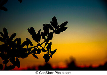 silhouetted tree branch
