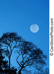 Silhouetted trees and moon