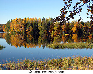 silhouetted trees with mirror reflection in mountain lake