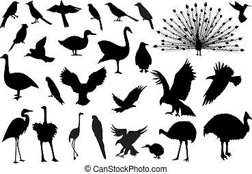 silhouetten, 27, vögel