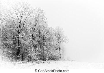 silhouetten, baum winter, wald