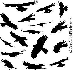 silhouetten, fliegendes, vögel