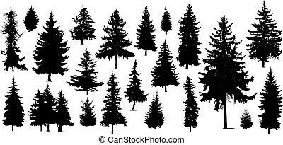 silhouetten, kiefer bäume