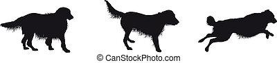 silhouetten, rennender , hund