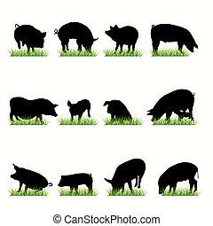 silhouetten, schweine, satz