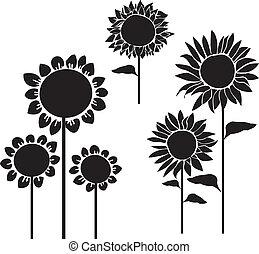silhouetten, sonnenblumen, vektor