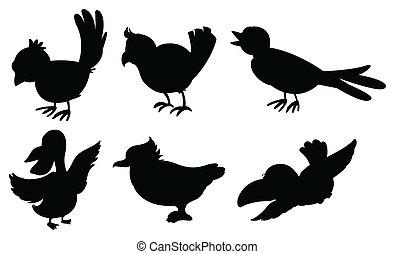 silhouetten, vogel