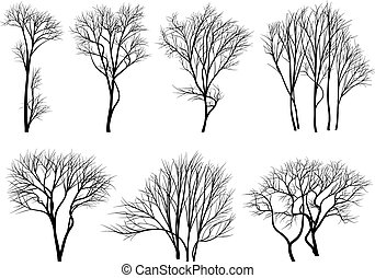 silhouetten, von, bäume, ohne, blätter