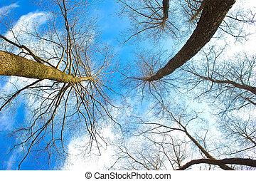 silhouetten, von, tote bäume, strecken, in, blauer himmel, gleichfalls, ein, ungewöhnlich, art, von