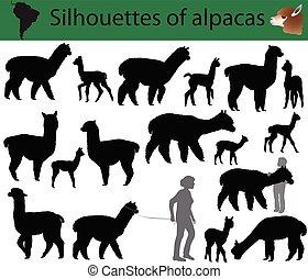 silhouettes, alpagas