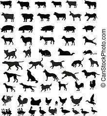 silhouettes, animaux, animaux familiers