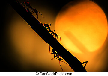 Silhouettes Ant with sunlight