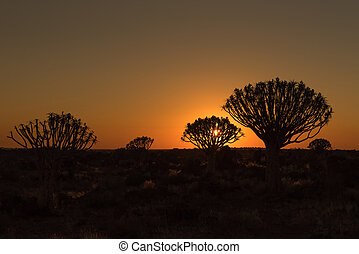 Silhouettes at sunset of quiver trees and rocks at Garas - ...