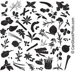 silhouettes, av, många, kryddor