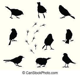 silhouettes, birds., hiver, ensemble