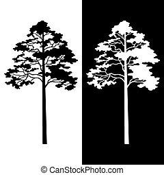 silhouettes, blanc, noir, arbres pin