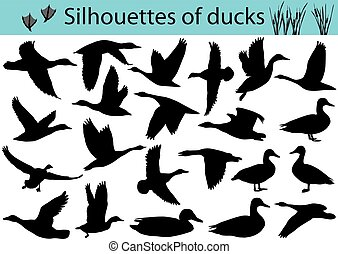 silhouettes, canards