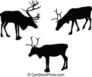 silhouettes, caribou, renne, ou
