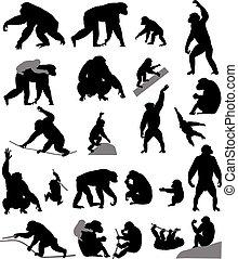 silhouettes, chimpanzés, petits