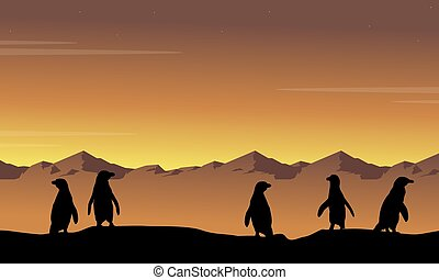 silhouettes, coucher soleil, paysage, manchots