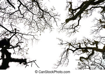Silhouettes dead trees. white background.