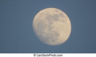 silhouettes, disque, oiseaux, lune
