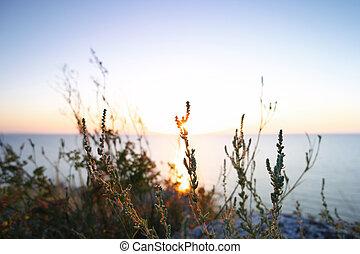 Silhouettes dry grass against Sea of Azov horizon -...