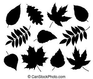 silhouettes, feuilles, ensemble, branches, isolé