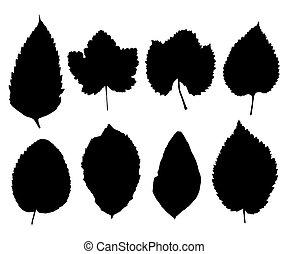 silhouettes, feuilles, ensemble, isolé, blanc