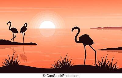 silhouettes, flamant rose, coucher soleil, paysage, beauté