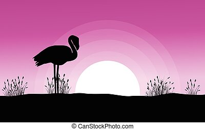 silhouettes, flamant rose, coucher soleil, paysage