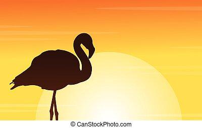 silhouettes, flamant rose, coucher soleil, scène