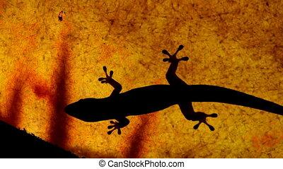 silhouettes, gekko