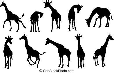 Silhouettes Giraffe Animal