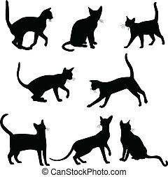 silhouettes, katter