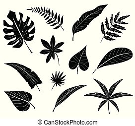 silhouettes, leaves., exotique